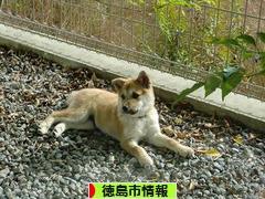 にほんブログ村 地域生活(街) 四国ブログ 徳島(市)情報へ