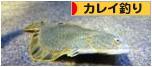 にほんブログ村 釣りブログ カレイ釣りへ