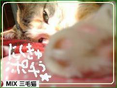 にほんブログ村 猫ブログ MIX三毛猫へ