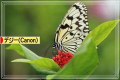 にほんブログ村 写真ブログ デジタル一眼(Canon)へ