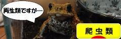にほんブログ村 その他ペットブログ 爬虫類へ