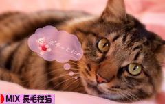 にほんブログ村 猫ブログ MIX長毛種猫へ