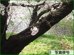 にほんブログ村 ポエムブログ 写真俳句へ
