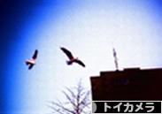 にほんブログ村 写真ブログ トイカメラへ