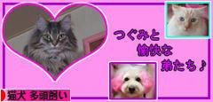 にほんブログ村 猫ブログ 猫犬 多頭飼いへ
