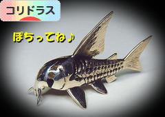 にほんブログ村 観賞魚ブログ コリドラスへ