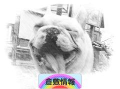 にほんブログ村 地域生活(街) 中国地方ブログ 倉敷情報へ