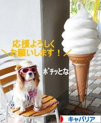 にほんブログ村 犬ブログ キャバリアへ