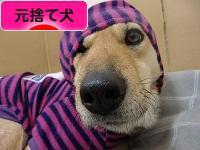 にほんブログ村 犬ブログ 元捨て犬へ