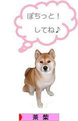 にほんブログ村 犬ブログ 茶柴犬へ