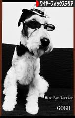にほんブログ村 犬ブログ ワイヤーフォックステリアへ