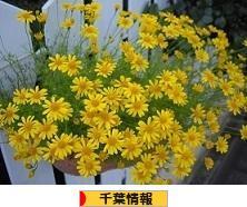 にほんブログ村 地域生活(街) 関東ブログ 千葉県情報へ