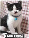 にほんブログ村 猫ブログ MIX白黒猫へ