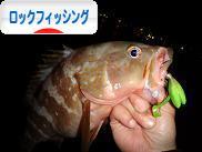 にほんブログ村 釣りブログ ロックフィッシングへ