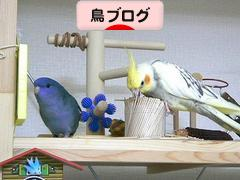 にほんブログ村 鳥ブログへ