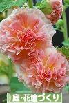 にほんブログ村 花ブログ 庭・花壇づくりへ