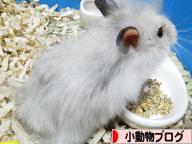 にほんブログ村 小動物ブログへ