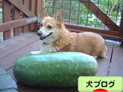 https://dog.blogmura.com/img/originalimg/0000023859.jpg