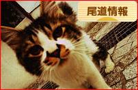 にほんブログ村 地域生活(街) 中国地方ブログ 尾道情報へ