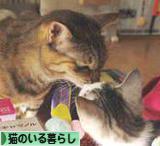 にほんブログ村 猫ブログ 猫のいる暮らしへ~☆いつもありがと~(o ̄▽ ̄)o(o ̄▽ ̄o)o( ̄▽ ̄o)