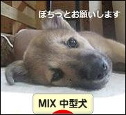 にほんブログ村犬ブログ MIX中型犬へ