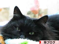 https://cat.blogmura.com/img/originalimg/0000244641.jpg