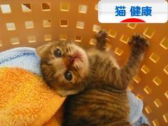 にほんブログ村 猫ブログ 猫 健康へ