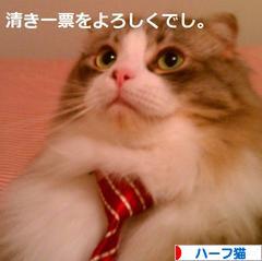 にほんブログ村 猫ブログ ハーフ猫へ