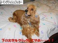 http://dog.blogmura.com/englishcockerspaniel/img/originalimg/0000249865.jpg