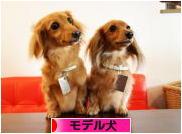 にほんブログ村 犬ブログ モデル犬へ