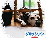 にほんブログ村 犬ブログ ダルメシアンへ
