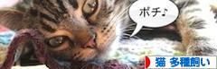 にほんブログ村 猫ブログ 猫 多種飼いへ