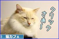 にほんブログ村 猫ブログ 猫カフェへ