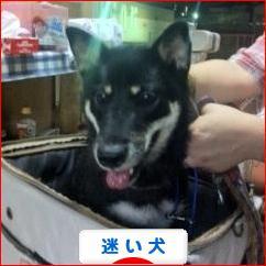 にほんブログ村 犬ブログ 迷い犬・迷子犬へ