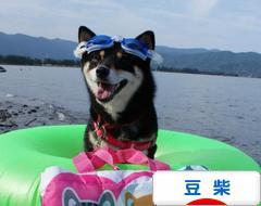 にほんブログ村 犬ブログ 豆柴犬へ