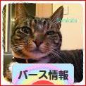 にほんブログ村 海外生活ブログ パース情報へ