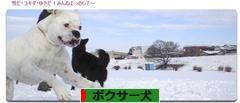 にほんブログ村 犬ブログ ボクサー犬へ
