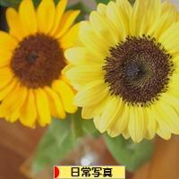 にほんブログ村 写真ブログ 日常写真へ