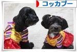 にほんブログ村 犬ブログ コッカプーへ