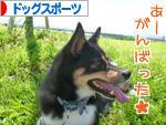 にほんブログ村 犬ブログ ドッグスポーツへ