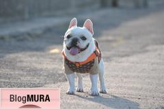 にほんブログ村 犬ブログ フレンチブルドッグへ