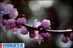 にほんブログ村 写真ブログ 四国風景写真へ