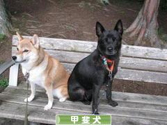 にほんブログ村 犬ブログ 甲斐犬へ
