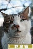 野良猫ブログランキング参加用リンク一覧