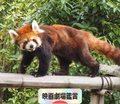 にほんブログ村 映画ブログ 映画劇場鑑賞へ