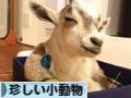にほんブログ村 小動物ブログ その他珍しい小動物へ