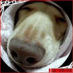 にほんブログ村 犬ブログ スムースダックスフンドへ