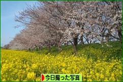 にほんブログ村 写真ブログ 今日撮った写真へ