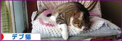 にほんブログ村 猫ブログ デブ猫へ