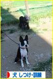 にほんブログ村 犬ブログ 犬 しつけ・訓練へ